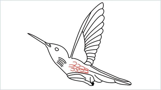 how to draw hummingbird step (13)