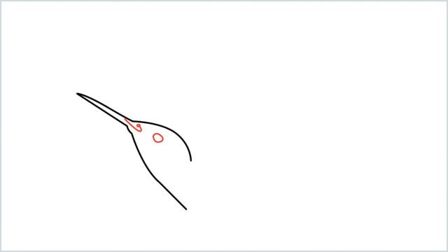 how to draw hummingbird step (3)