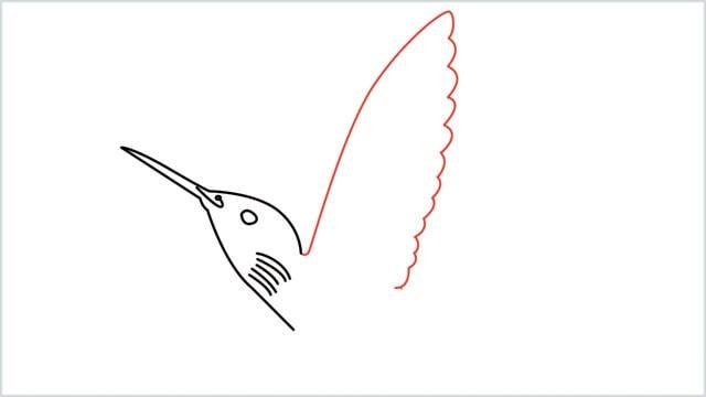 how to draw hummingbird step (5)