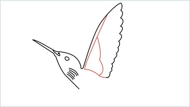 how to draw hummingbird step (6)