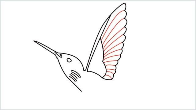 how to draw hummingbird step (7)