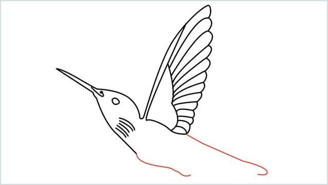 how to draw hummingbird step (8)