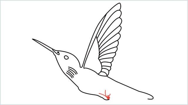 how to draw hummingbird step (9)