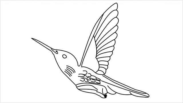 how to draw hummingbird