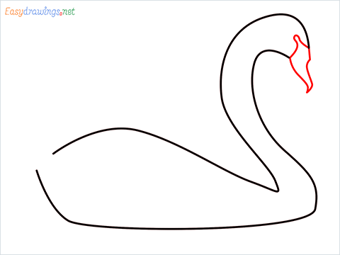 How To Draw A Beautiful Swan Step (3)