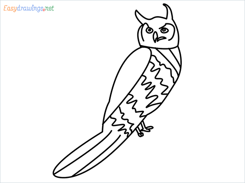 How To Draw A Easy Owl Bird Step by Step for Beginners