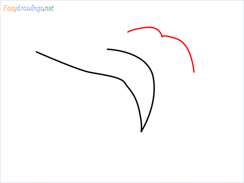 How To Draw A Frog Easy Step (2)