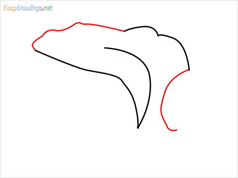 How To Draw A Frog Easy Step (3)