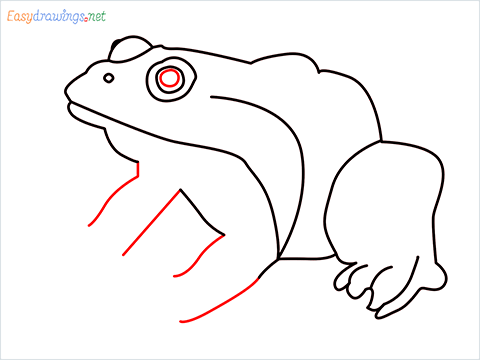 How To Draw A Frog Easy Step (7)