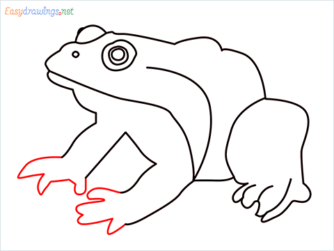 How To Draw A Frog Easy Step (8)