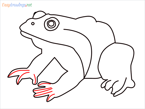 How To Draw A Frog Easy Step (9)