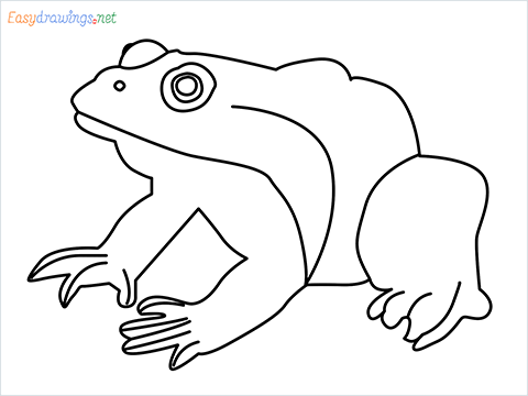 How To Draw A Frog Easy Step by Step for Beginners