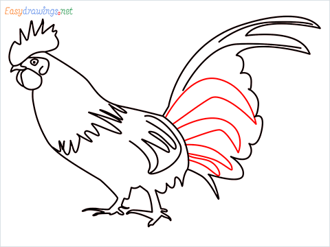 How To Draw A Rooster (cock) Step (13)