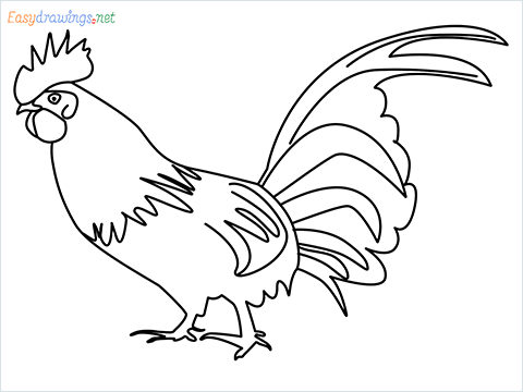 How To Draw A Rooster (cock) Step by Step for Beginners