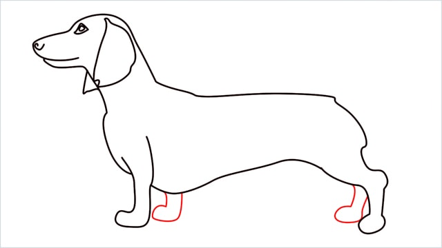 How to draw a Dachshund step (10)