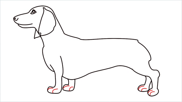 How to draw a Dachshund step (11)
