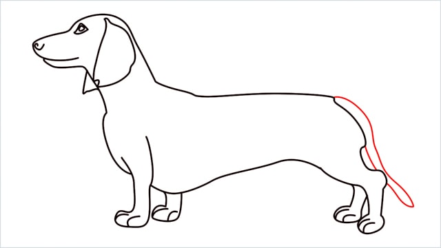How to draw a Dachshund step (12)