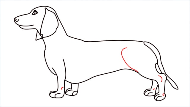 How to draw a Dachshund step (13)