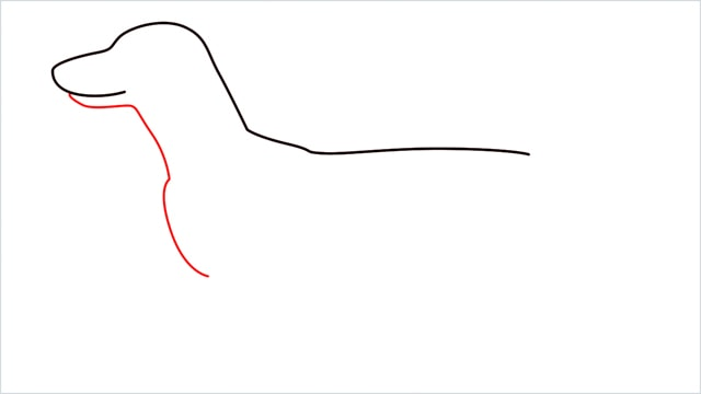 How to draw a Dachshund step (3)