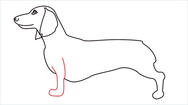 How to draw a Dachshund step (9)