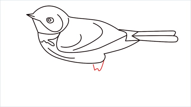 How to draw a Eastern bluebird step (12)
