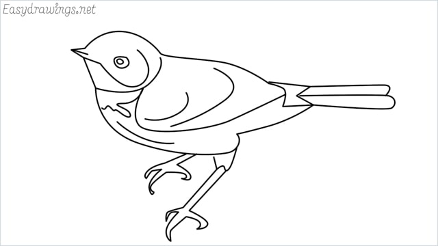 How to draw a Eastern bluebird step by step
