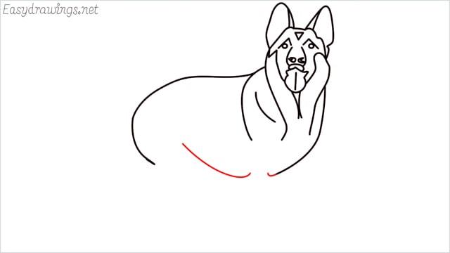How to draw a German Shepherd step (12)