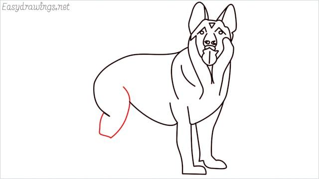 How to draw a German Shepherd step (15)