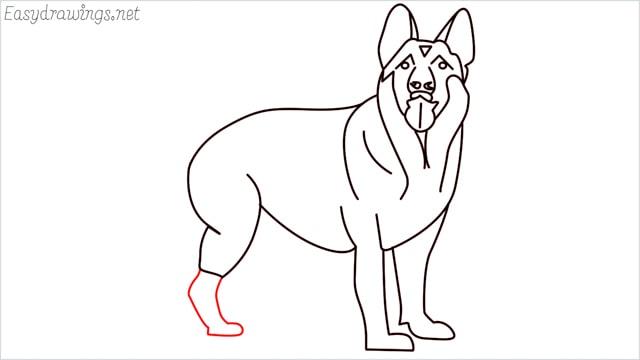How to draw a German Shepherd step (16)