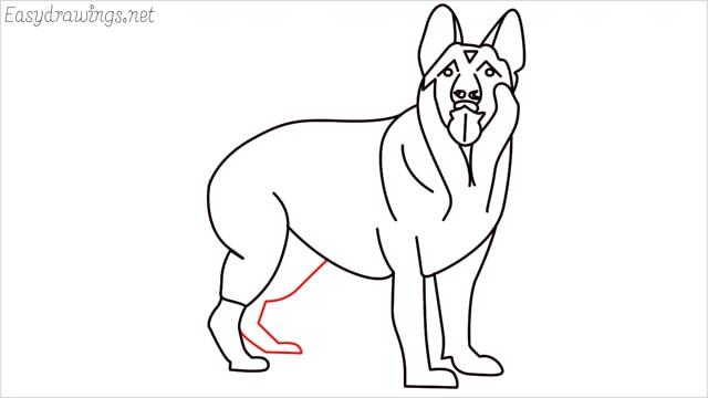 How to draw a German Shepherd step (17)