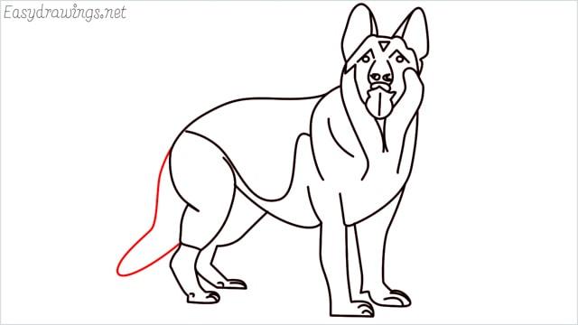 How to draw a German Shepherd step (19)