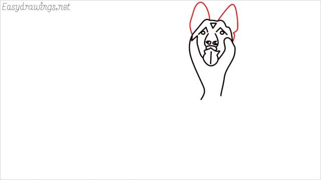 How to draw a German Shepherd step (8)