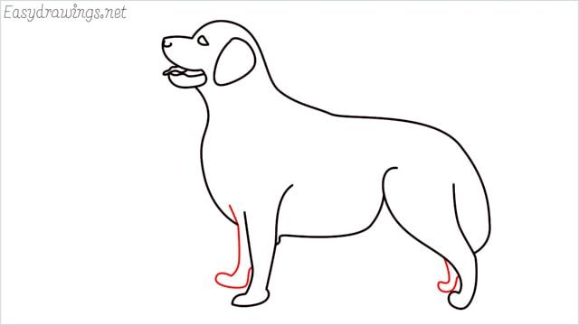 How to draw a Golden Retriever step (10)