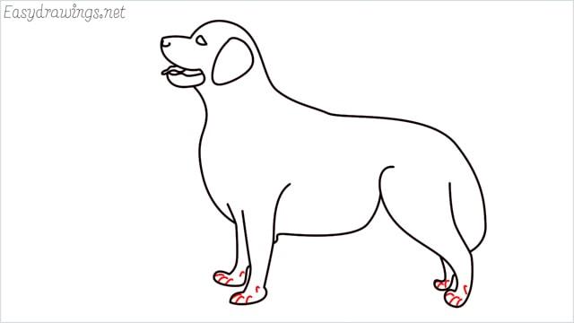 How to draw a Golden Retriever step (11)