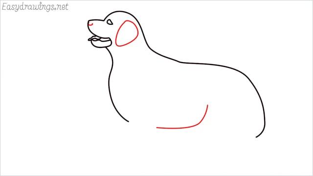 How to draw a Golden Retriever step (7)
