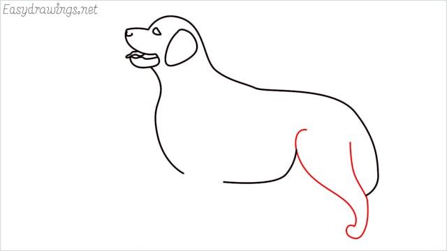 How to draw a Golden Retriever step (8)