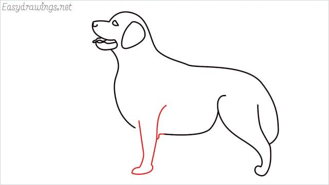 How to draw a Golden Retriever step (9)