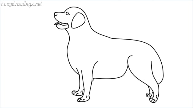 How to draw a Golden Retriever step by step