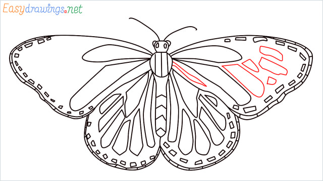 How to draw a Monarch butterfly step (13)