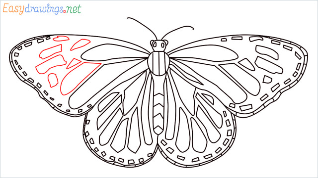 How to draw a Monarch butterfly step (14)