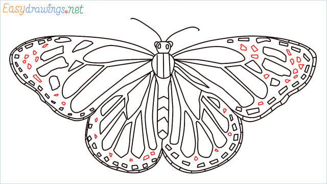 How to draw a Monarch butterfly step (15)