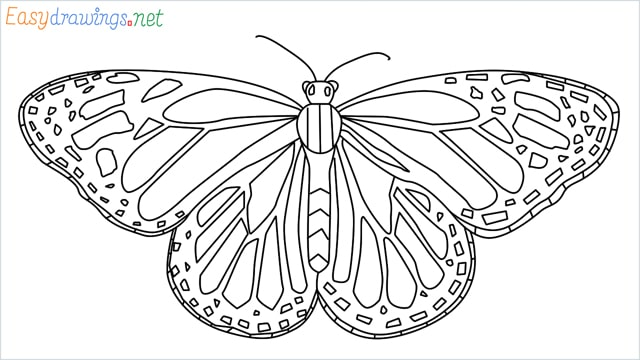 How to draw a Monarch butterfly step (16)