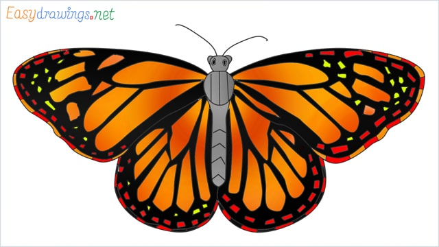 How to draw a Monarch butterfly step by step
