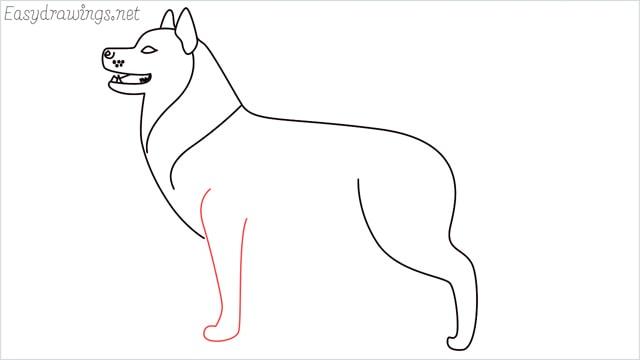 How to draw a husky step (10)