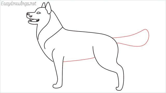 How to draw a husky step (11)
