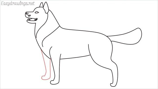 How to draw a husky step (12)