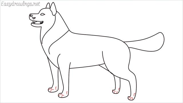 How to draw a husky step (14)