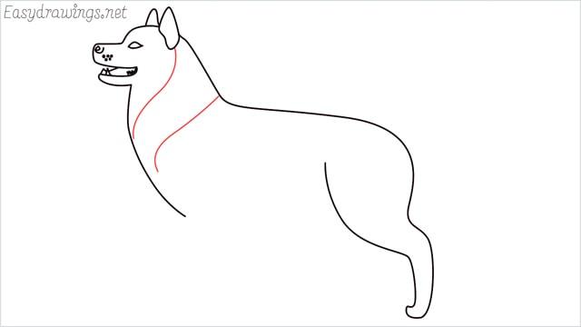 How to draw a husky step (9)