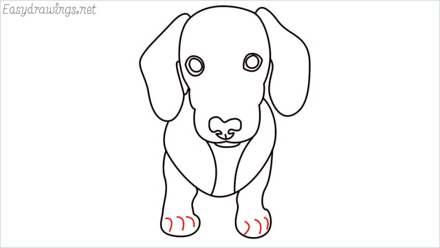 How to draw a puppy step (10)