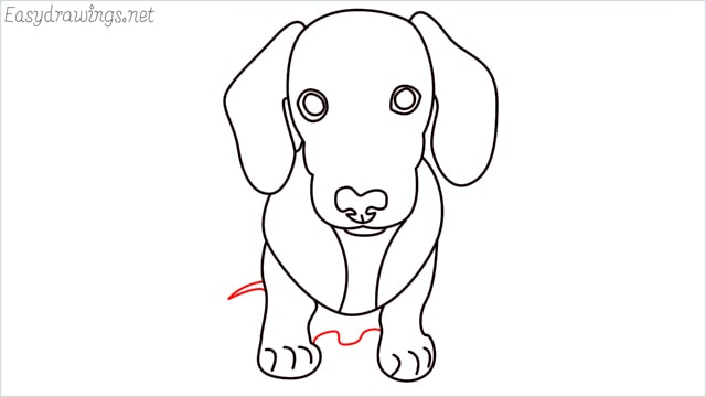 How to draw a puppy step (11)